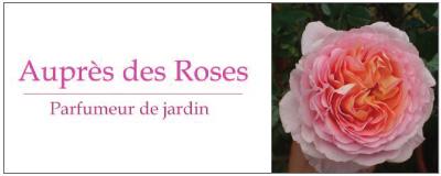 auprès des roses