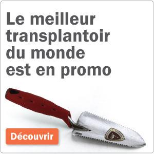 promo transplantoir
